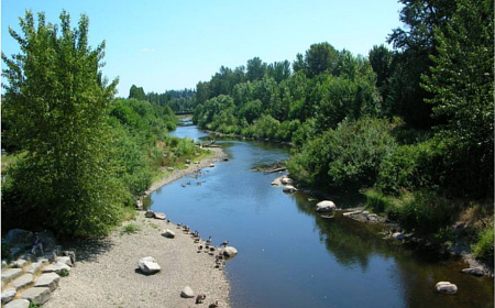 Salmon trails and tales for Lake sammamish fishing